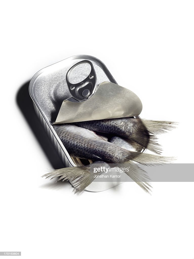 Sardines in a Can : Stock Photo