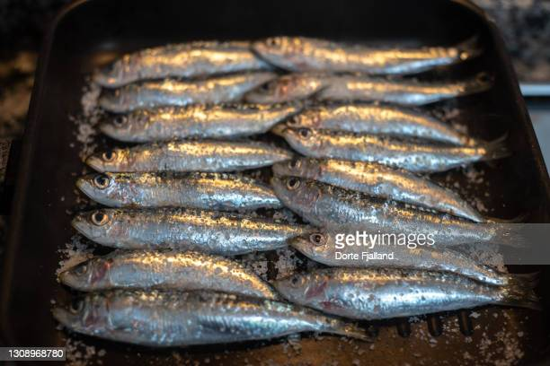 sardines on a pan with salt ready to be cooked - dorte fjalland stock pictures, royalty-free photos & images