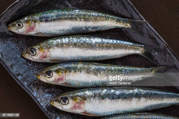 sardines on a serving plate - mackerel stock pictures, royalty-free photos & images