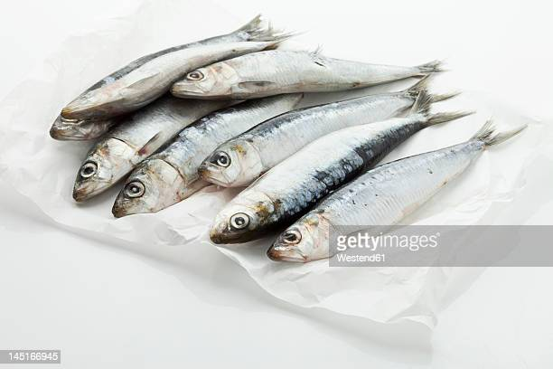 sardines on wax paper - sardine foto e immagini stock