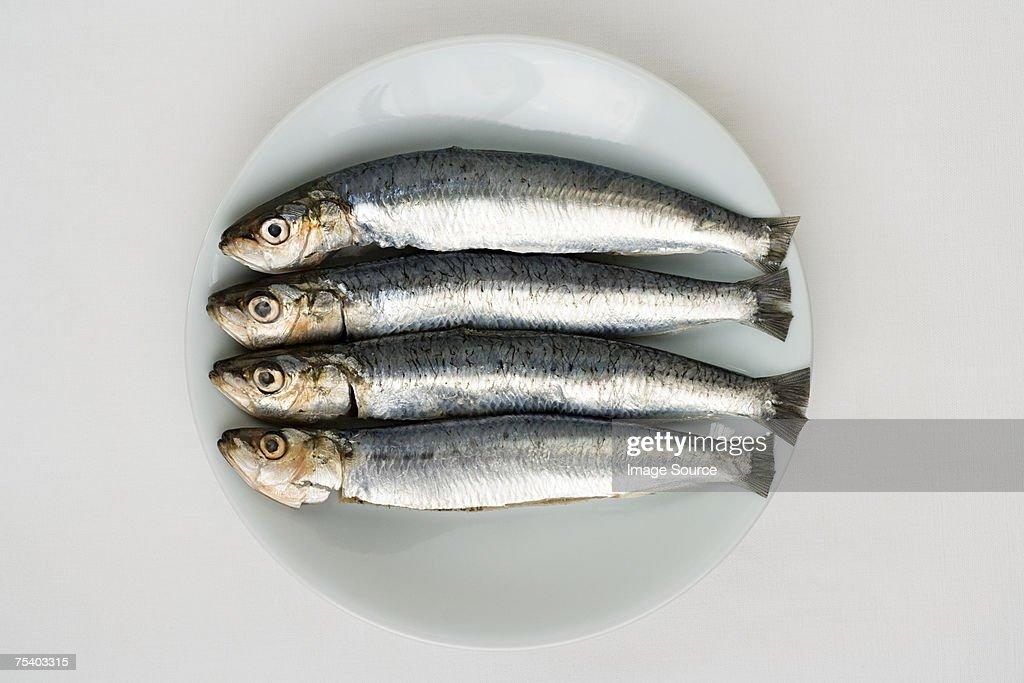 Sardines : Stock Photo
