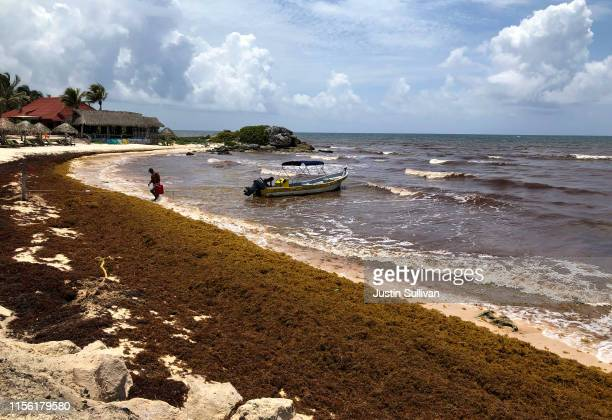 Sargassum a seaweedlike algae covers a beach on June 15 2019 in Tulum Mexico Mexico's Riviera Maya Caribbean tourist towns of Cancun Playa del Carmen...