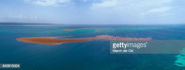 sargasum from the air - hispaniola stock photos and pictures