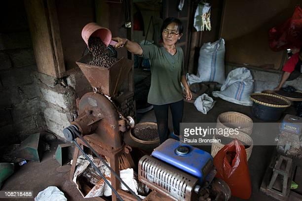 Sari Artini grinds Luwak beans in an old rusted grinder January 20 2011 in Pupuan village Bali Indonesia Sari and her husband Wayan Dira have had a...
