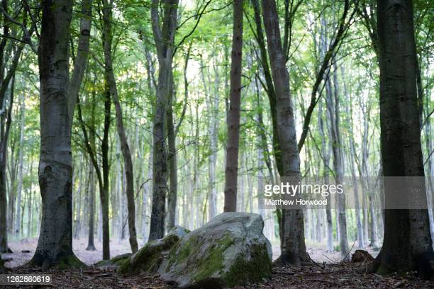 A sarsen stone lies in the West Woods on July 30 2020 in Marlborough England Archaeologists have discovered that the sarsen stones used for the...
