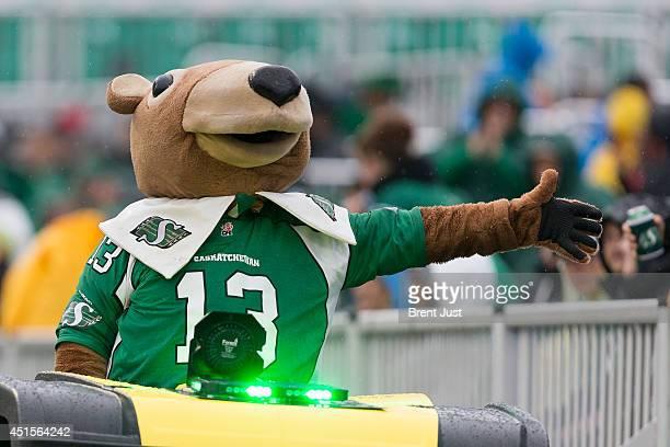 Saskatchewan Roughrider mascot Gainer the Gopher celebrates with fans during a pre-season game between the Edmonton Eskimos and Saskatchewan...