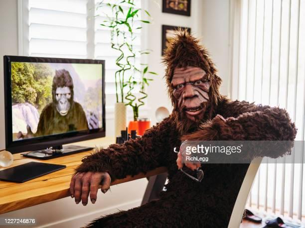sasquatch y gorila en un chat web - bigfoot fotografías e imágenes de stock