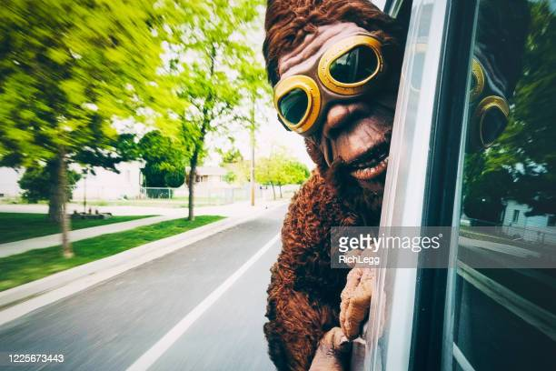 sasquatch riding in a car - bigfoot stock pictures, royalty-free photos & images