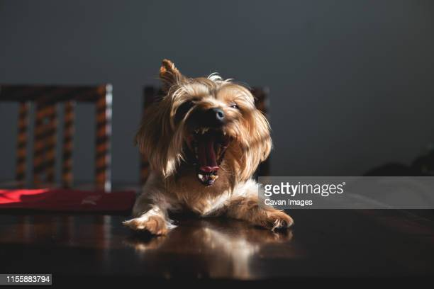 """sassy dog says, """"caption this!"""". - meme stock pictures, royalty-free photos & images"""