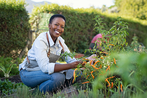 Satisfied woman working at vegetable garden 1153409243