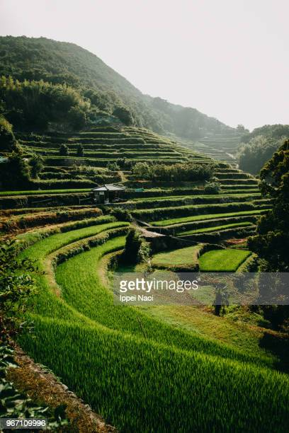 Satoyama scenery with rice terraces, Japan