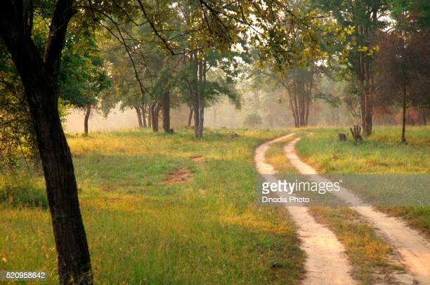 satpura tiger reserve with forest path, madhai piparia madhya pradesh, india - reserva natural parque nacional fotografías e imágenes de stock