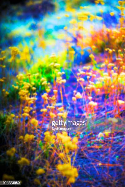 Saturated color nature composition