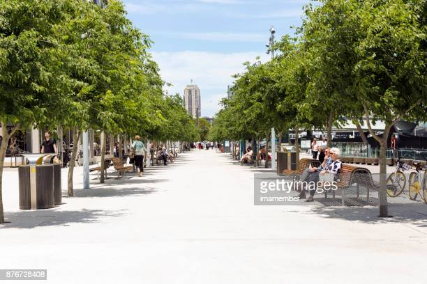 saturday afternoon at barangaroo with view to draling harbour - darling harbour stock pictures, royalty-free photos & images