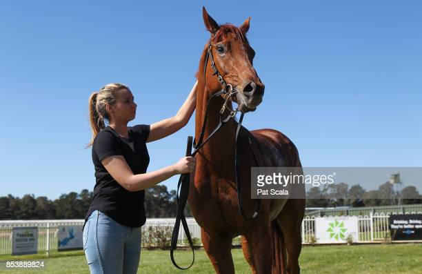 Saucy Jack after winning Norman 'Ruffy' Ruff Memorial Maiden Plateat Ararat Racecourse on September 26 2017 in Ararat Australia