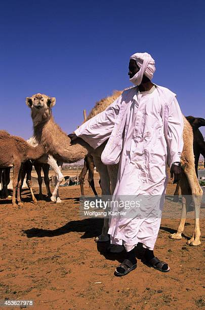 Saudi Arabianear Riyadh Camel Market Local Man With Camels