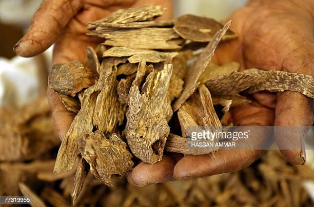 A Saudi man holds a handful of Oud or Agarwood at his shop in Riyadh 10 October 2007 Oud also known by the names Agrawood and Aloeswood in the...