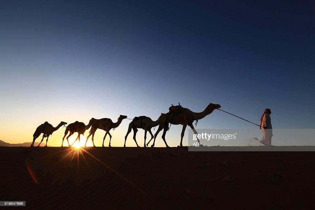 TOPSHOT-SAUDI-DESERT-CAMELS : News Photo