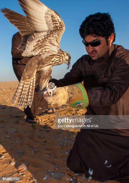 Saudi man with falcon perching on hand eating a pigeon AlJawf Province Sakaka Saudi Arabia on January 23 2010 in Sakaka Saudi Arabia
