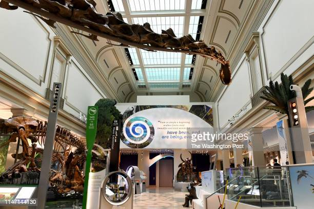 Sauropod that lived 152 million years ago looms over the Deep Time exhibit at the Smithsonian Institution's National Museum of Natural History May...