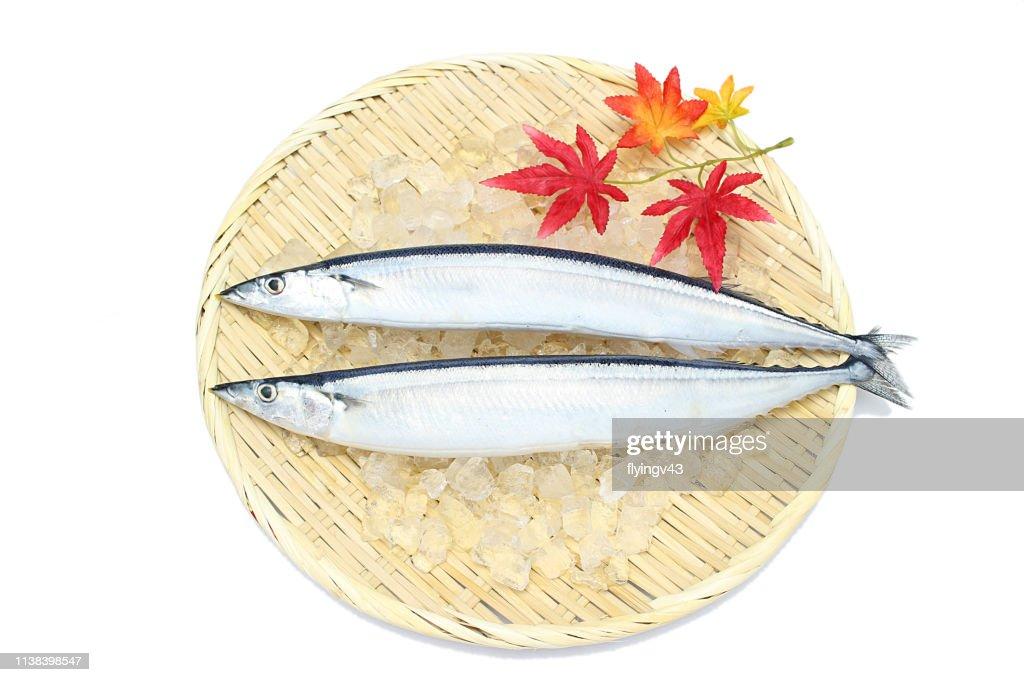 Saury fish : Stock Photo