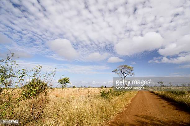 savanna in kruger park, south africa - mpumalanga province stock pictures, royalty-free photos & images