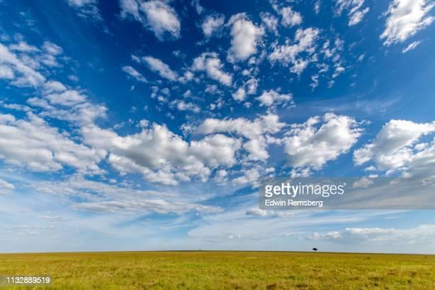 savanna sky - terreno coberto de grama - fotografias e filmes do acervo