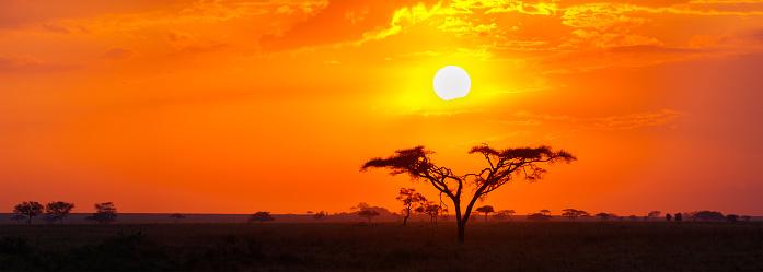 Savanna Sunrise and Acacia Tree in the Serengeti, Tanzania Africa 618447882