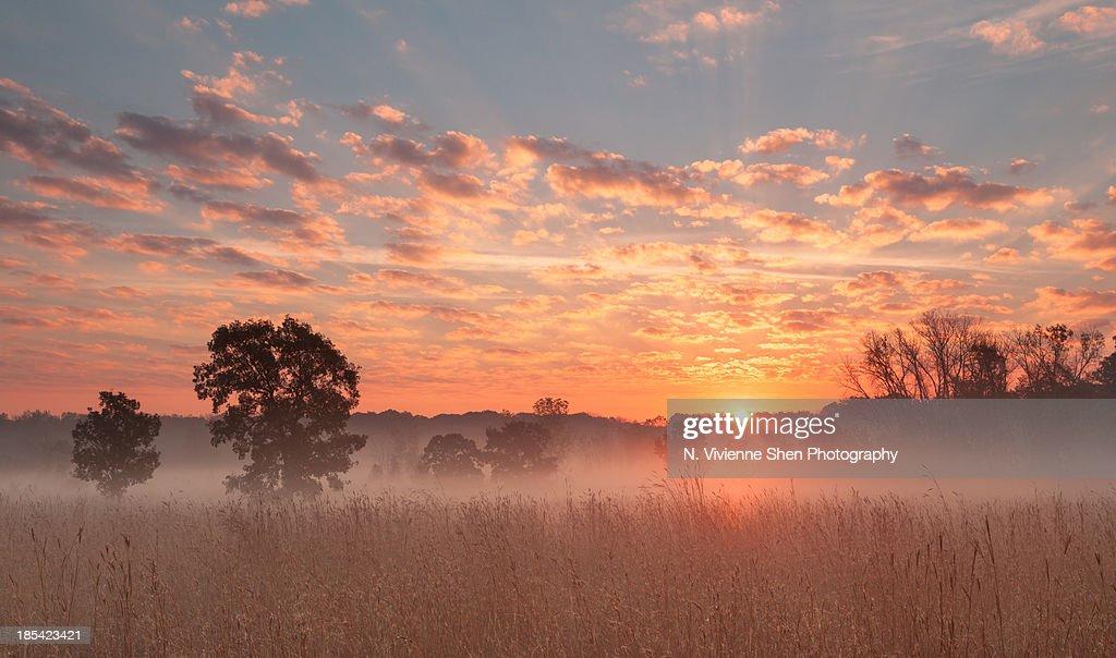 Savanna sunrise : ストックフォト