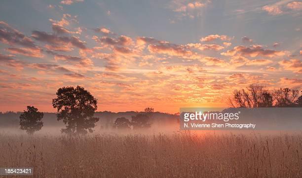 savanna sunrise - レイクフォレスト ストックフォトと画像