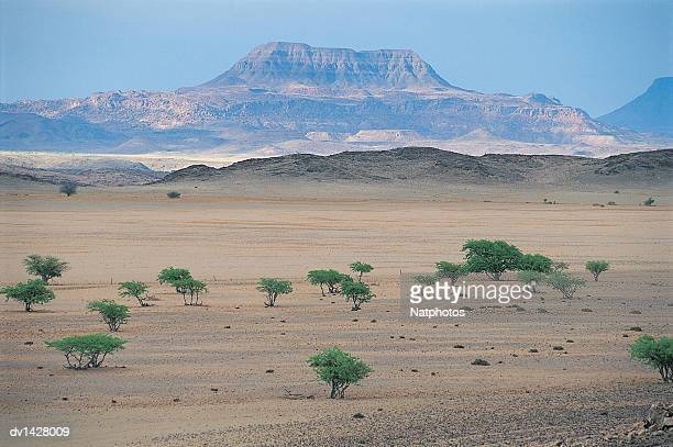 Savannah and Trees With a Mountain Range in the Background, Damaraland, Namibia