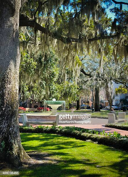 savannah city life - live oak tree stock pictures, royalty-free photos & images