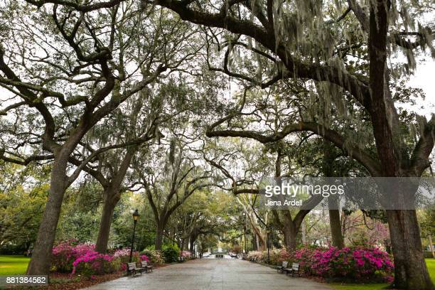 savannah georgia trees - spanish moss stock pictures, royalty-free photos & images