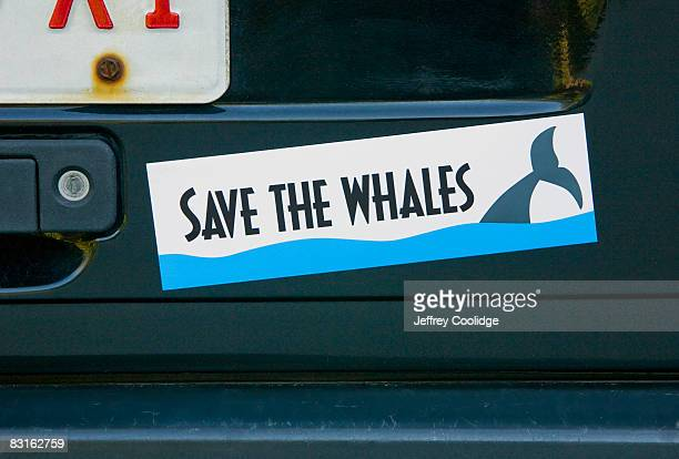 save whales bumper sticker on car - bumper sticker stock photos and pictures