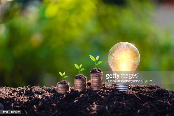savings growth concept,plant sprouting from the ground with green background. - earth day stock pictures, royalty-free photos & images