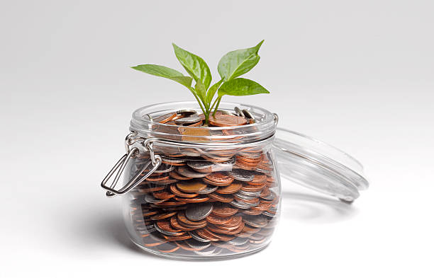 savings with shoots growing picture