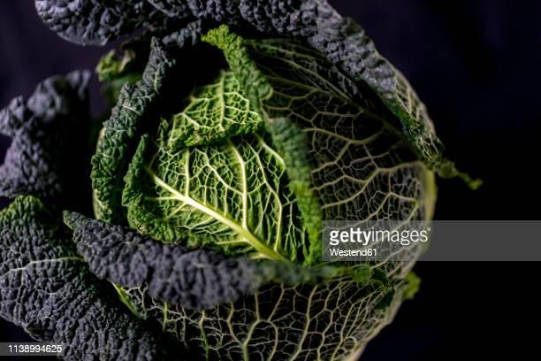savoy cabbage, close up - kool kool familie stockfoto's en -beelden