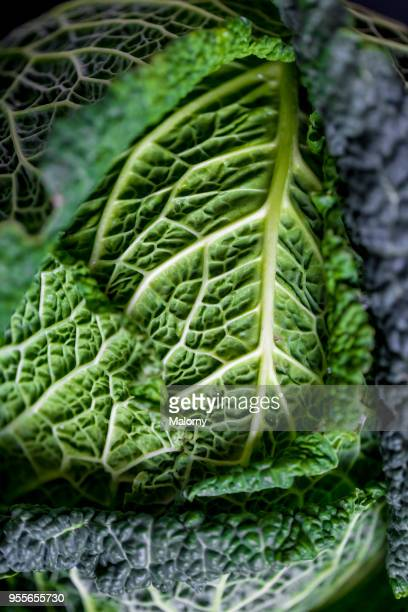 Savoy cabbage laying on black background.