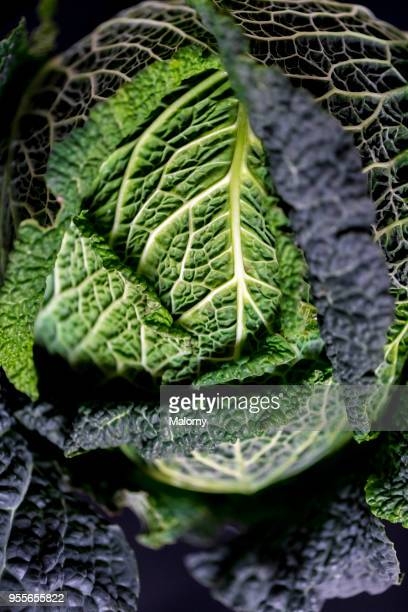 savoy cabbage laying on black background. - cavolo cappuccio verde foto e immagini stock