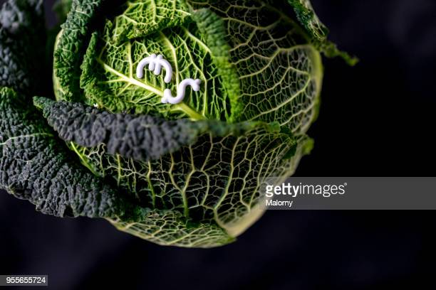 savoy cabbage with euro and dollar sign laying on black background. - cavolo cappuccio verde foto e immagini stock
