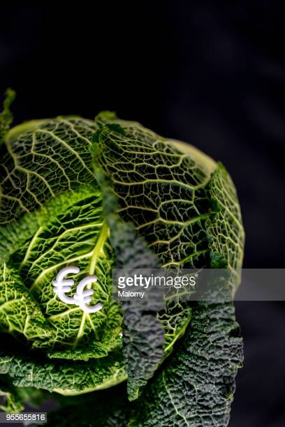 Savoy cabbage with euro sign laying on black background.