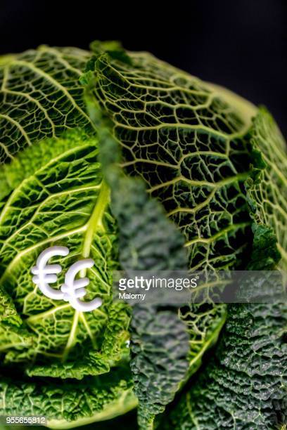Savoy cabbage with euro signs laying on black background.