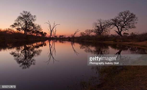 savuti channel at sunset - meerkanal stock-fotos und bilder