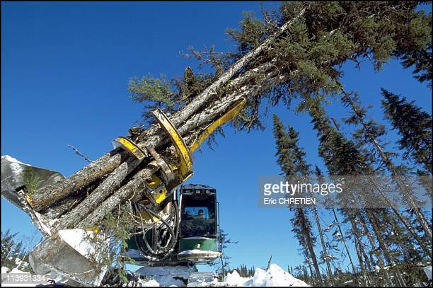 Saw Blade Harvester Saguenay In Quebec Canada In 2000It takes 15 seconds to fall a tree with this machine wich will cut 5 to 8 trees before putting...