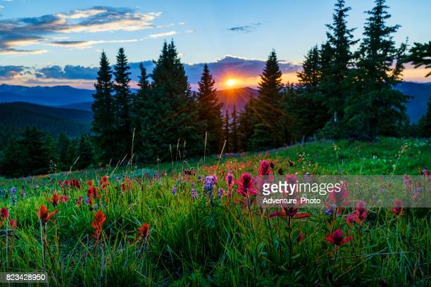 sawatch mountains summer view with wildflowers - colorado stock pictures, royalty-free photos & images