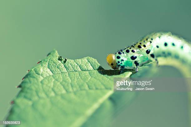 sawfly macro - s0ulsurfing stock pictures, royalty-free photos & images