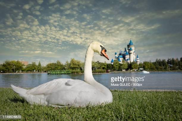 sazova park, eskiehir - eskisehir stock pictures, royalty-free photos & images