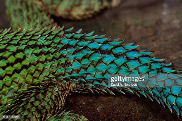 scales of an green spiny lizard - rettile foto e immagini stock