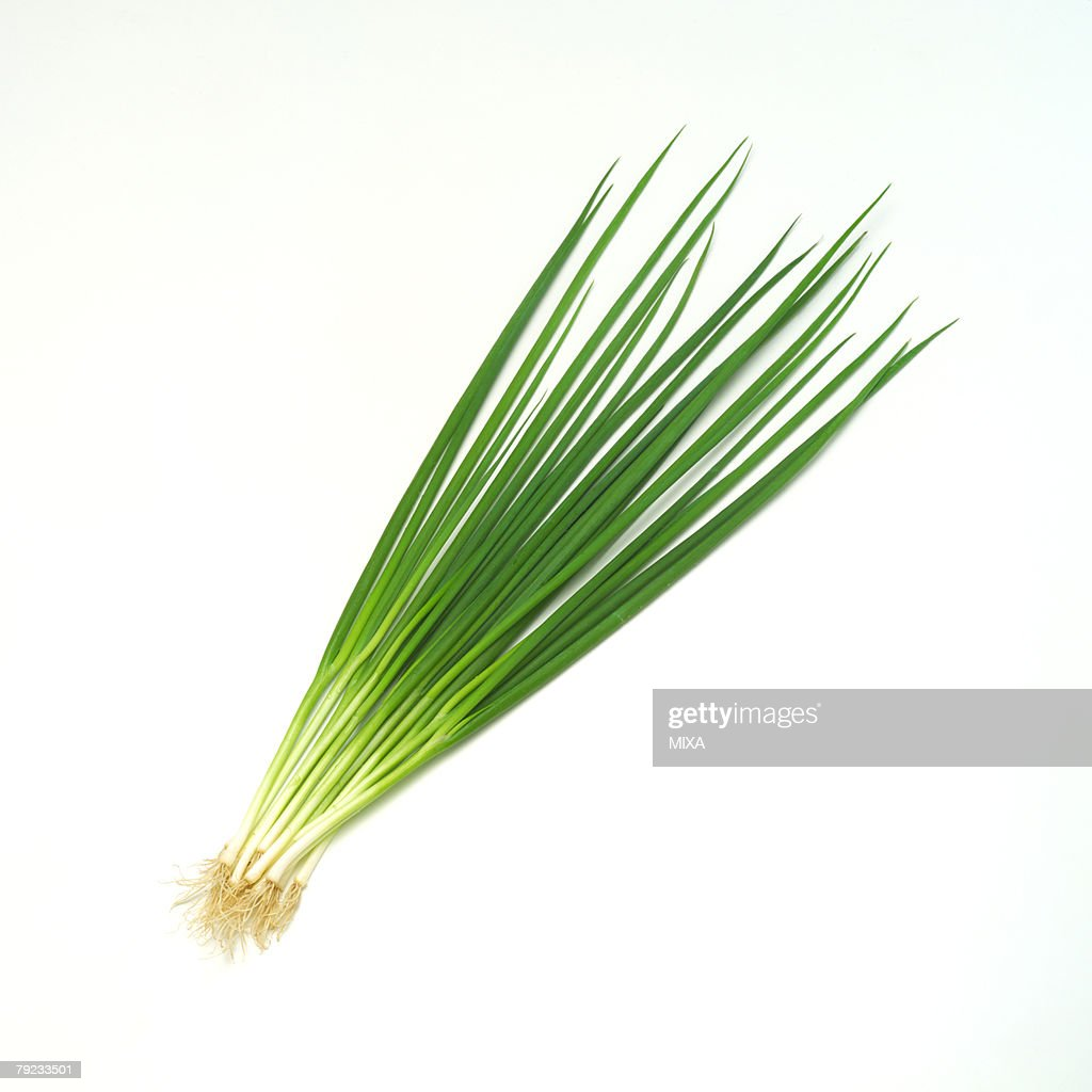 Scallion : Stock Photo