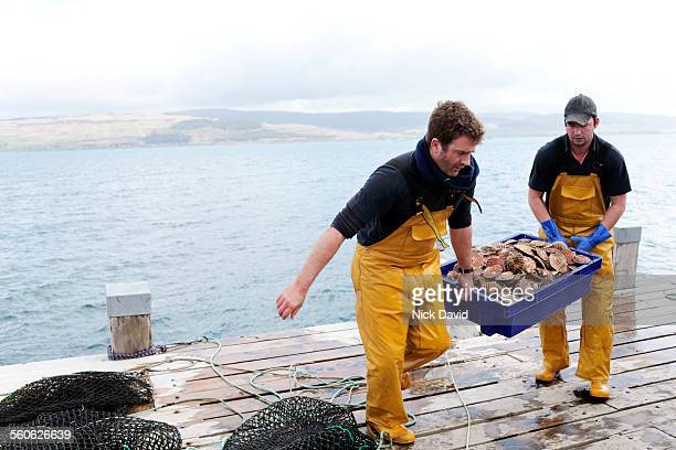 Scallop divers fishing in Scotland